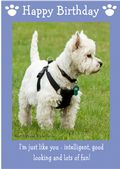 "West Highland White Terrier-Happy Birthday - ""I'm Just Like You"" Theme"
